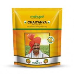 Cotton Seed Chaitanya Mahyco (MRC-7377 BG-2)