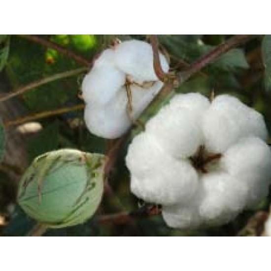 Cotton Seeds Ankur Jai BG-2