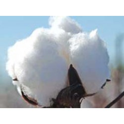 Cotton Seeds Ankur 3028 BG-II