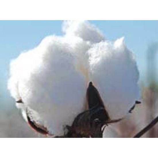 Cotton Seeds Ankur 3028 BG-II