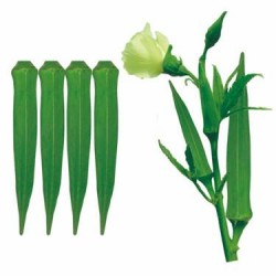Ankur Hybrid –NO. 465 Okra (Bhendi ) Vegetable Seeds - 100 GRM