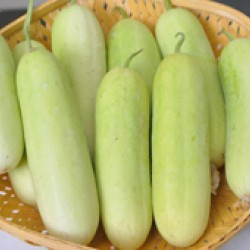Ankur Hybrid Cucumber-A7 Vegetable Seeds- 25 GRM