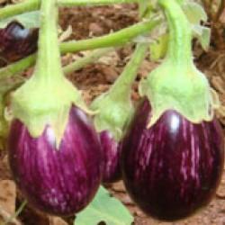 Ankur Hybrid brinjal-Abhishek  (10g) Vegetable Seeds