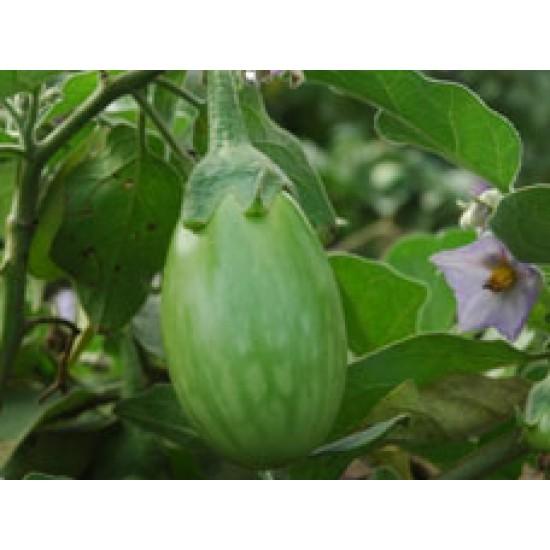Ankur Hybrid brinjal-Kirti (10g) Vegetable Seeds