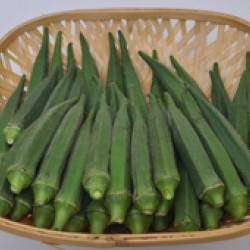 Ankur Hybrid – Lucky Okra (Bhendi ) Vegetable Seeds