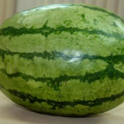 Ankur Hybrid Watermelon– Kashish (10g) vegetable seeds
