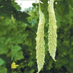 Ankur Hybrid  Bitter Gourd-shreya (white) (10g)- Vegetable Seeds
