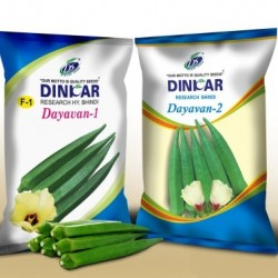 Dinkar Okra(Bhendi)Vegetable Seeds Dayavan-2 -250 GRM