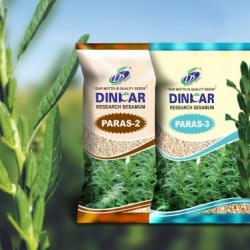 Dinkar Sesame(Til) Vegetable Seeds Paras-2 -500 GRM