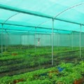 Agro Shed Nets | Green Nets
