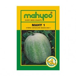 Mahyco PUMPKIN MPH-1 (50g) Vegetable Seeds