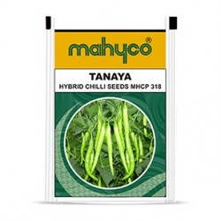 Mahyco chilly MHCP 318- TANAYA (10g) Vegetable Seeds