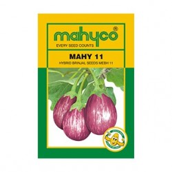 Mahyco MAHY 11 (MEBH 11) (10g) Brinjal vegetable Seeds