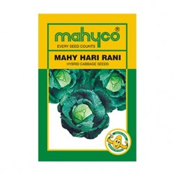 Mahyco HARI RANI (10g) Cabbage Vegetable Seeds