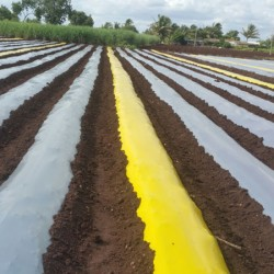 Mulch film - yellow 1x 400x 30 microns - Premium Quality