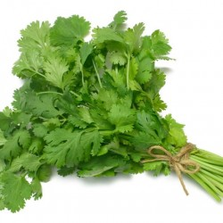 Sardar Coriander(Dhaniya) Vegetable Seeds 251 -1 KG