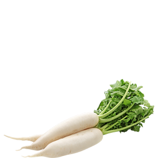 Ankur Hybrid Radish Chandni (50g)  Vegetable Seeds