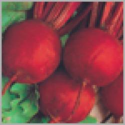 Sungro Castelo (50g) Beet Root Vegetable Seeds