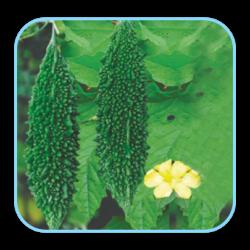 Sungro Hybrid bitter gourd Aman (10g) Vegetable Seeds