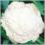 Cauliflower Seeds