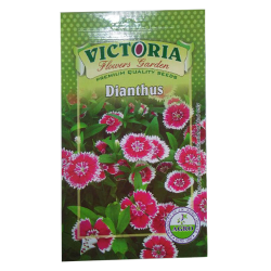 Victoria Dianthus Flower Seed