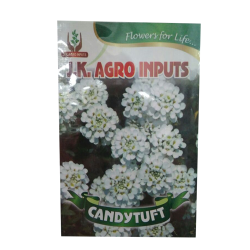 Candytuft Flower Seed