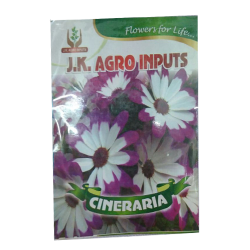 Cineraria Flower Seed