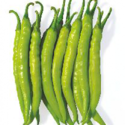 Nirmal Hybrid chilli Vegetable Seeds Maina NCH-12 -10 GRM