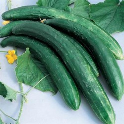 Green Cucumber F1 Hybrid vegetable Seeds
