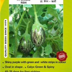 Jindal Brinjal Hybrid (baingan Seeds)-Rishi-10GM