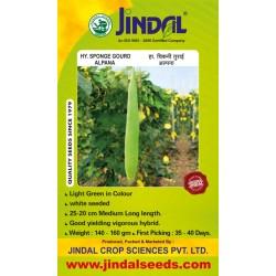 Jindal Sponge gourd  Hybrid Seeds(Spanj Laukee Seeds)-Alpana-50GM
