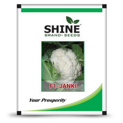 Cauliflower - Janki (Pack of 5 of 50gm)