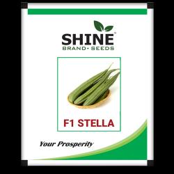 Ridge gourd -F1 stella 10 gram