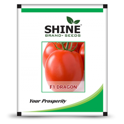 Hybrid Tomato Seeds - F1 Dragon (10GM) (DRAGON01)