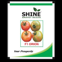 Hybrid Tomato Seeds - F1 Jumbo